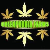 Greenphoria Farms